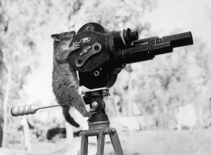 An Australian possum climbing a movie camera