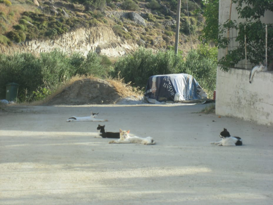 5 cats lying lazily in the middle of the road