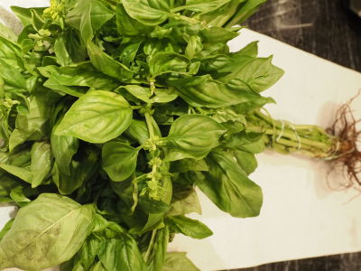 Farm Fresh Basil Plants