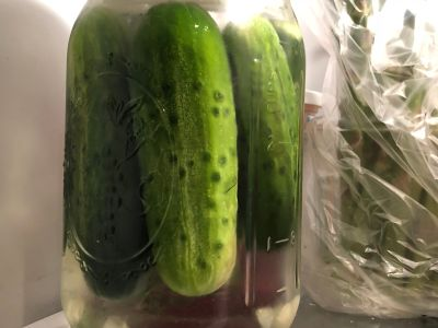 Pickles Living Happily in the Fridge
