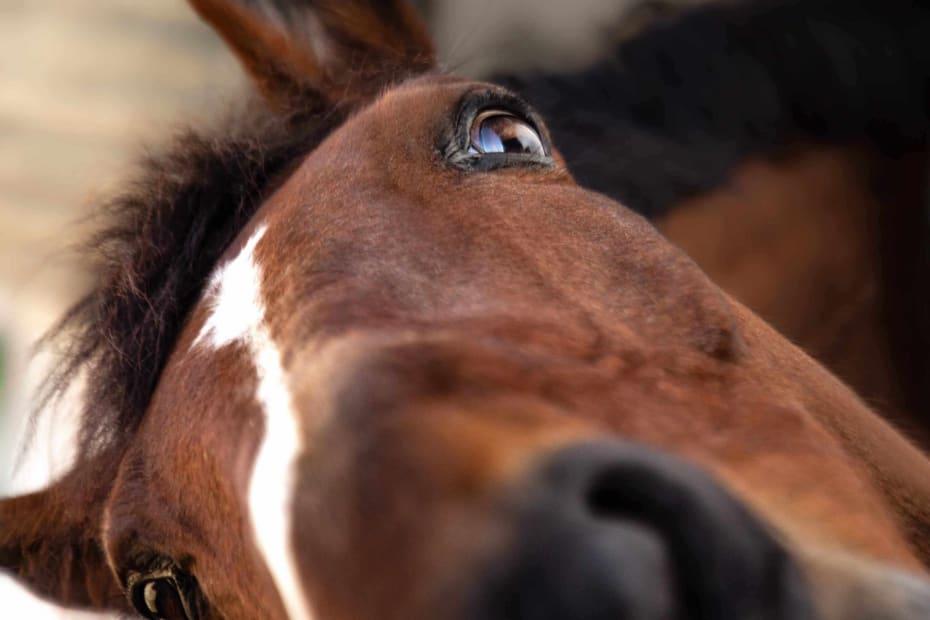 Επικοινωνήστε με την σχολή ιππασίας Εκάλης