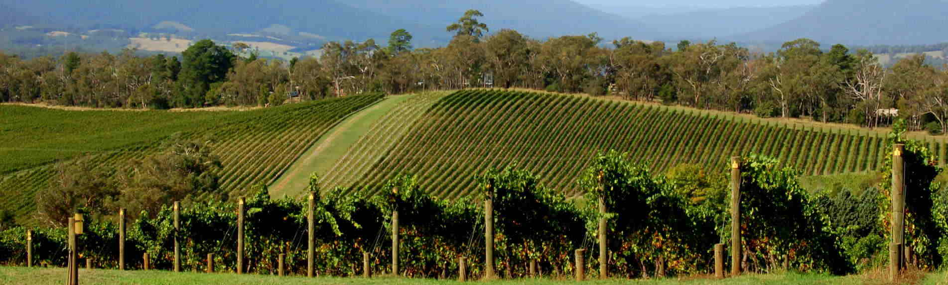 Yarra Valley and Dandenong Ranges Tours
