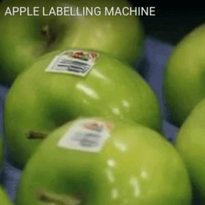 Case Study Apple Labelling Machine