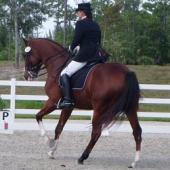 Brevard Equestrian Center, Grant, , FL
