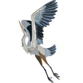 Blue Heron Holistic Health, Boise, , ID