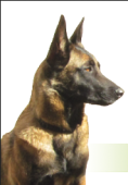 SD Dog Trainer, Spring Valley, , CA
