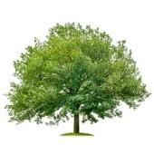 Woodland Tree Service