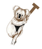 Koala T Carpet Cleaning, Loveland, , CO