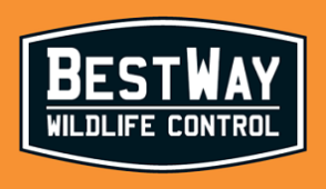 BestWay Wildlife Control