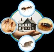 Paske Pest Control & Wildlife Solutions