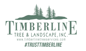 Timberline Tree Service, West Nyack, , NY