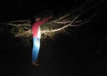 Warga menunjukkan kayu besar yang tumbang membuat listik padam.