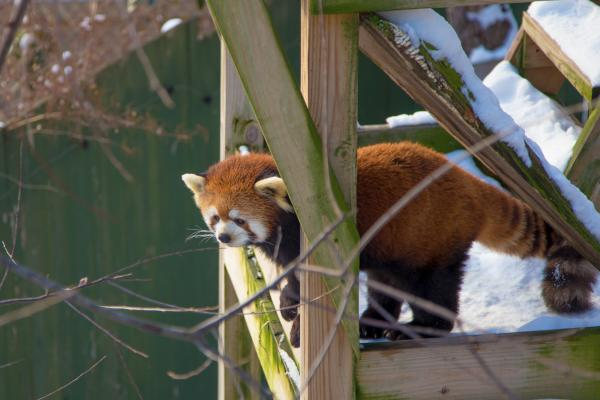 Roger Williams Park Zoo Winter Fun February Admission Discount