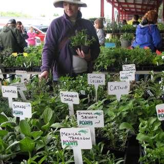 29th Annual Spring Herb Festival