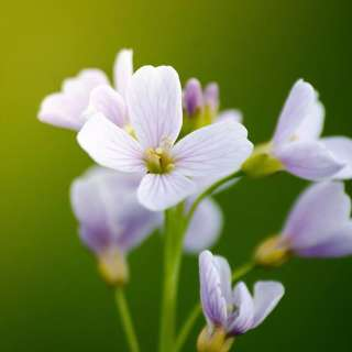 Flower Essence Therapy Free Talk