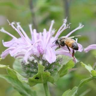 Bug Day and National Pollinator Week Celebration