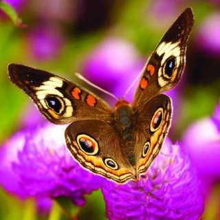 Winged Wonders: Step Into the World of Butterflies