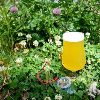 Archetype Beer Release: The Explorer IPA