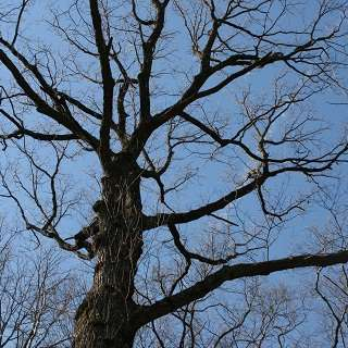 Naturalist Niche: Old Growth Forest