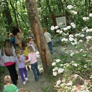 Naturalist Niche: Spring Wildflowers
