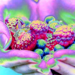 The Snozberries