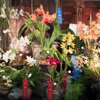 20th Annual Asheville Orchid Festival