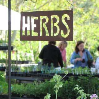 28th Annual Asheville Herb Festival