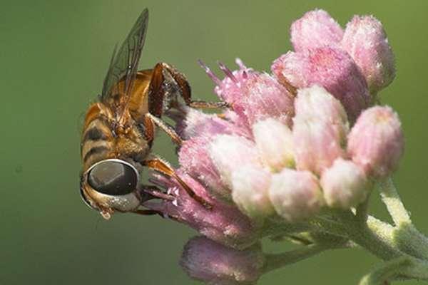 Pollinator Palooza