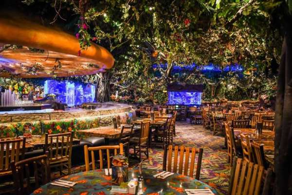 Kids Eat for $3.99 at Rainforest Cafe