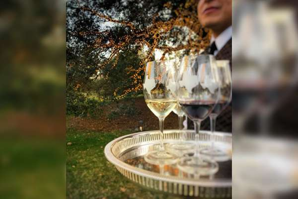 Tastings Under the Tree: Best Wines for Entertaining