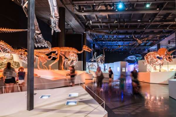 Major Savings on HMNS Experiences!