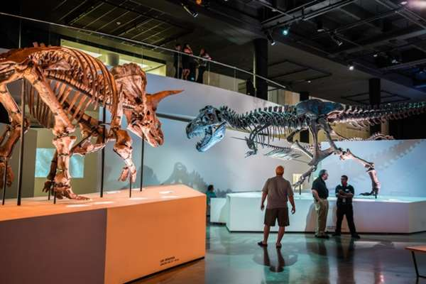 60% off General Admission Ticket at the Houston Museum of Natural Science