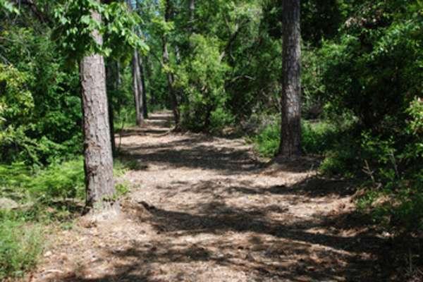 Evening Hike @ Pundt Park | Spring | Texas | United States