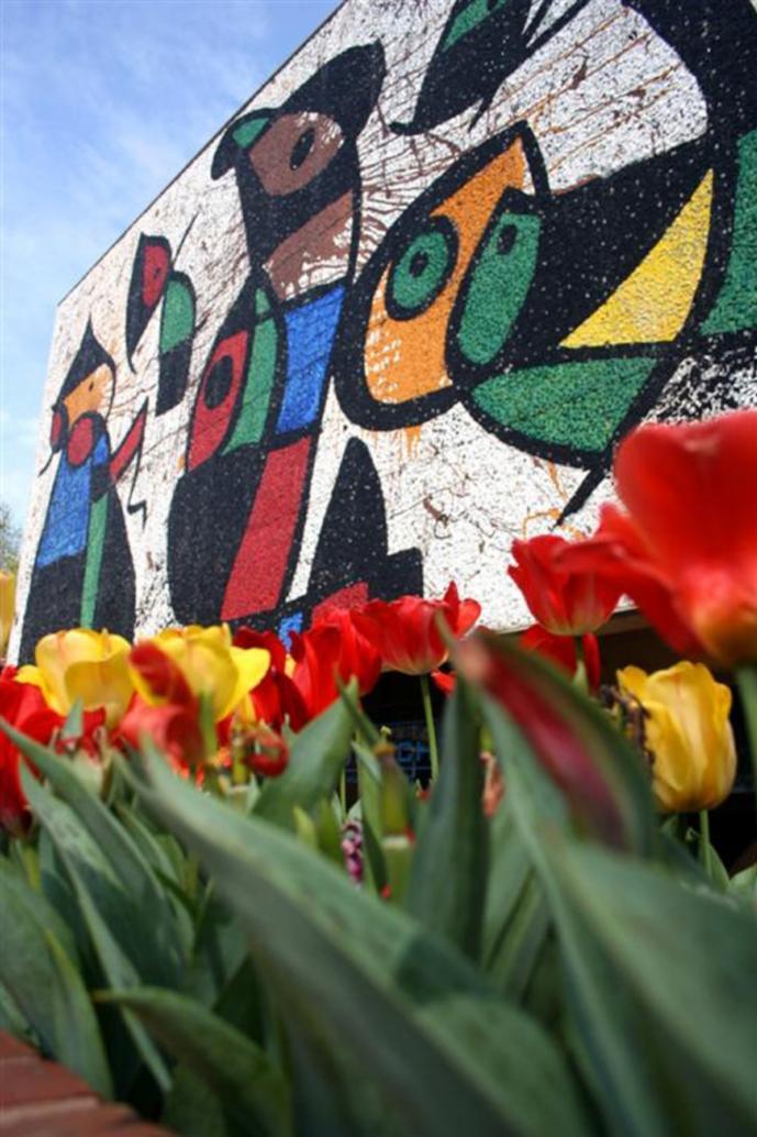 WSU Ulrich Museum Miro Tulips