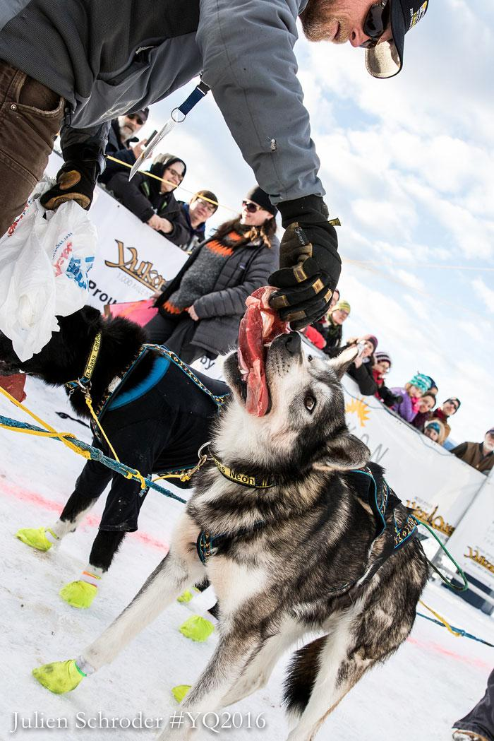 Yukon Quest Start - Fairbanks, Alaska