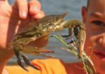 Go crabbing