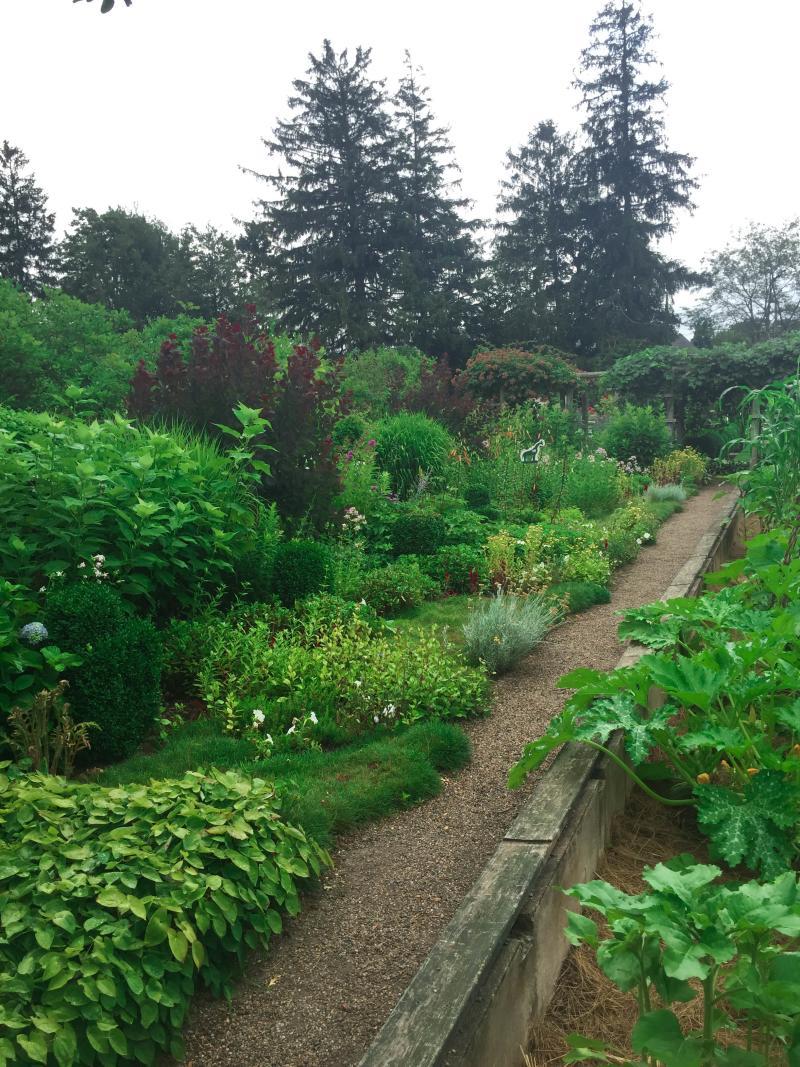 veg garden 2