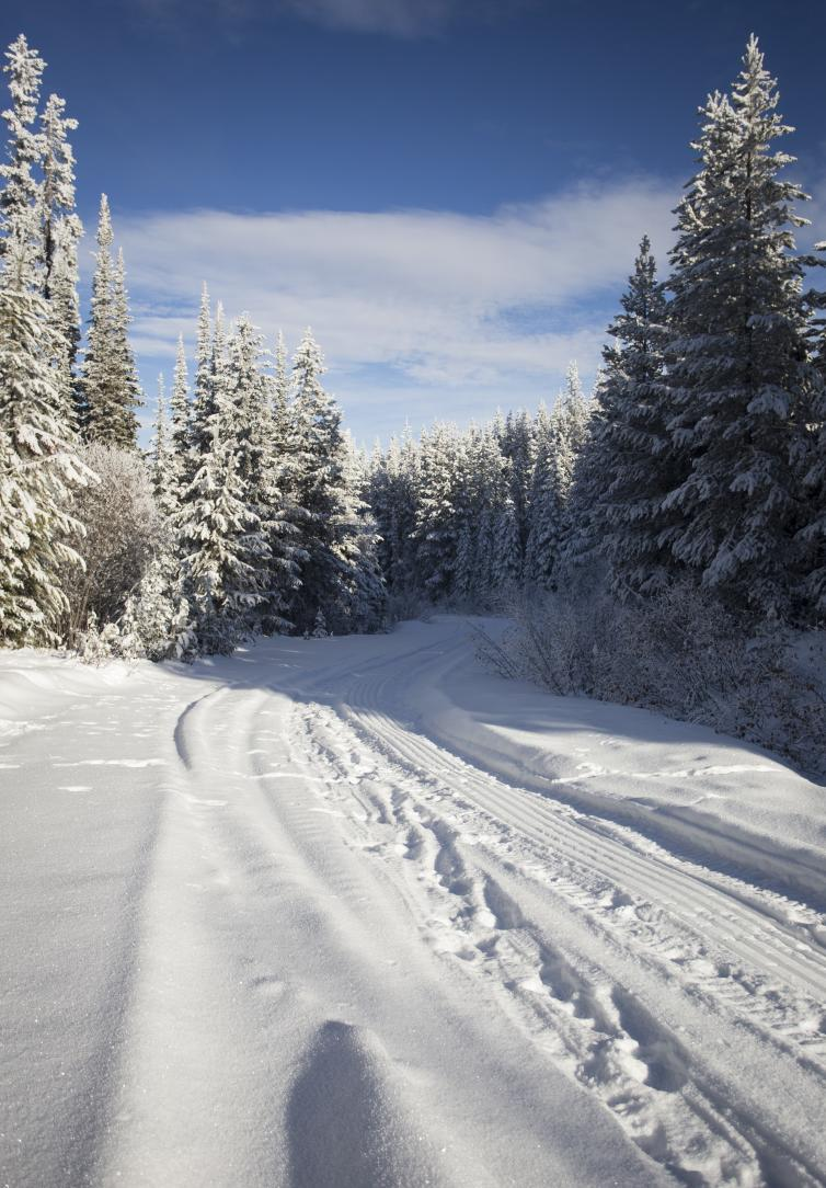 Bear Creek Forest Service Road in the Winter