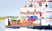 Ferry Thumb