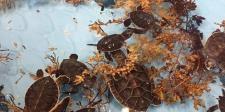 Turtles Marine Science Center