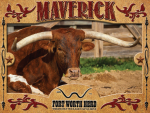 Maverick Longhorn