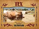 Tex Longhorn