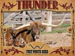 Thunder Longhorn