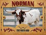 Norman Longhorn