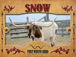 Snow Longhorn