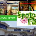 Spring Fling: Bird Feathers & Bones