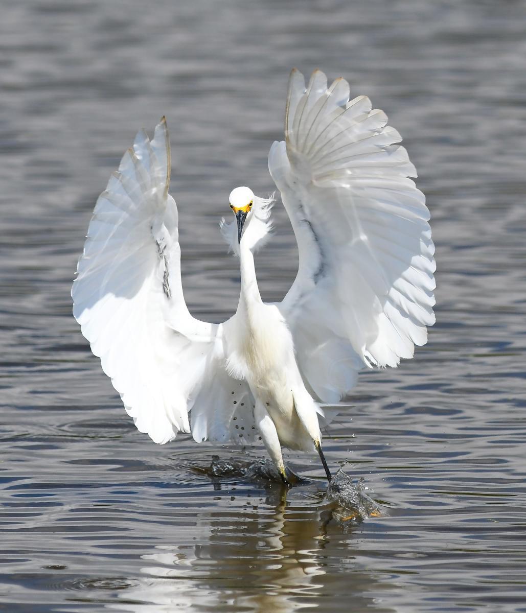 white landing