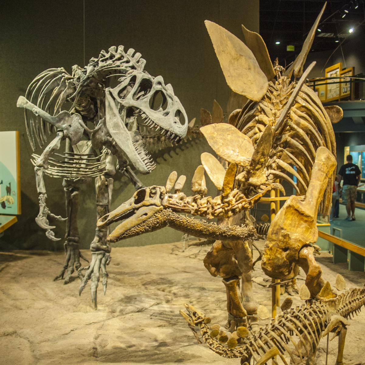 Copy of denver-museum-nature-science-dinosaurs