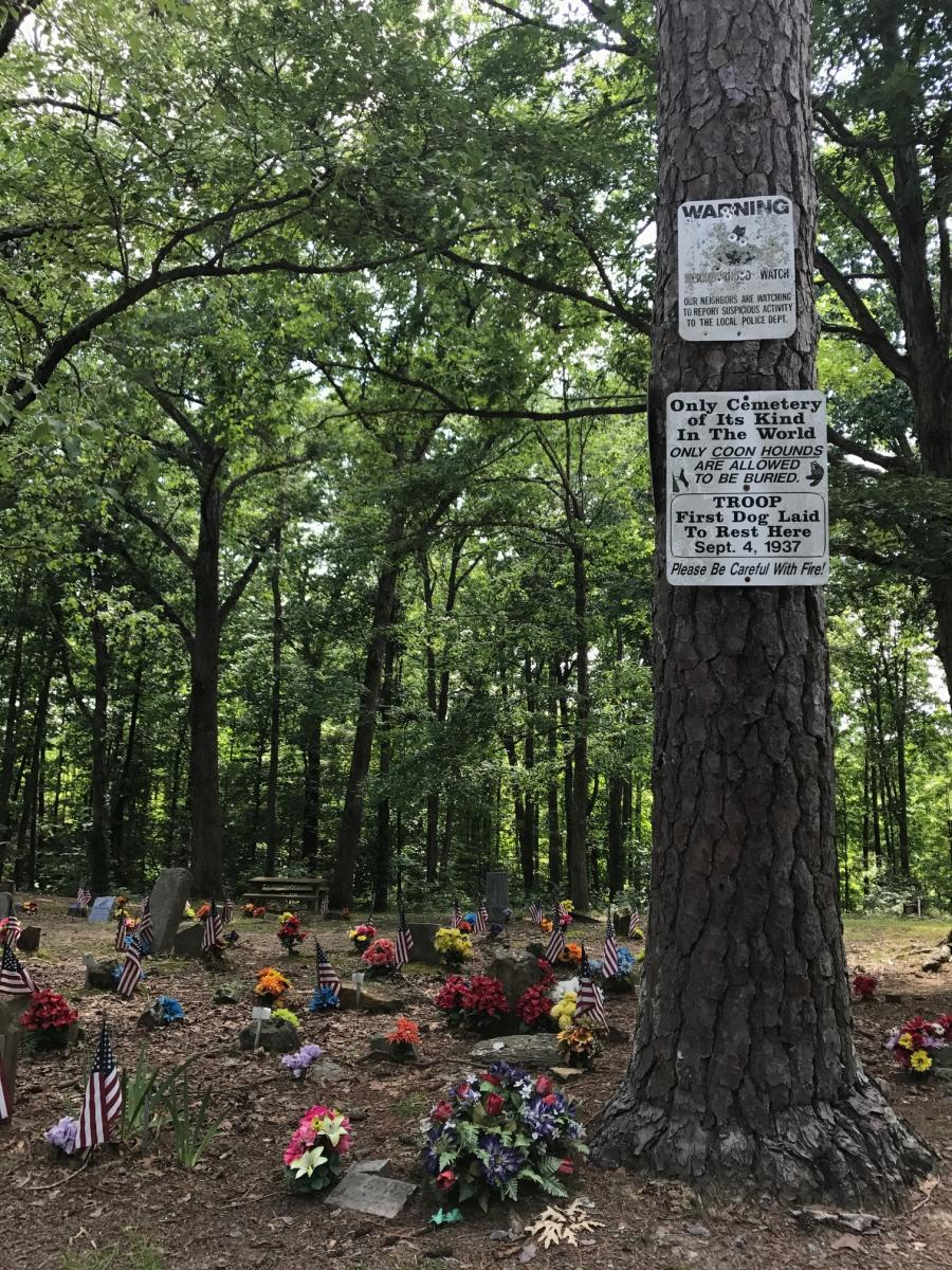 Carley's Adventures: Coon Dog Cemetery