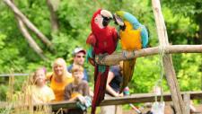 Elmwood Park Zoo - Macaws